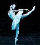 Swan-Lake-